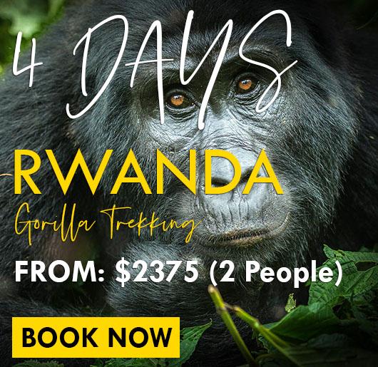 4 days budget safari in Rwanda