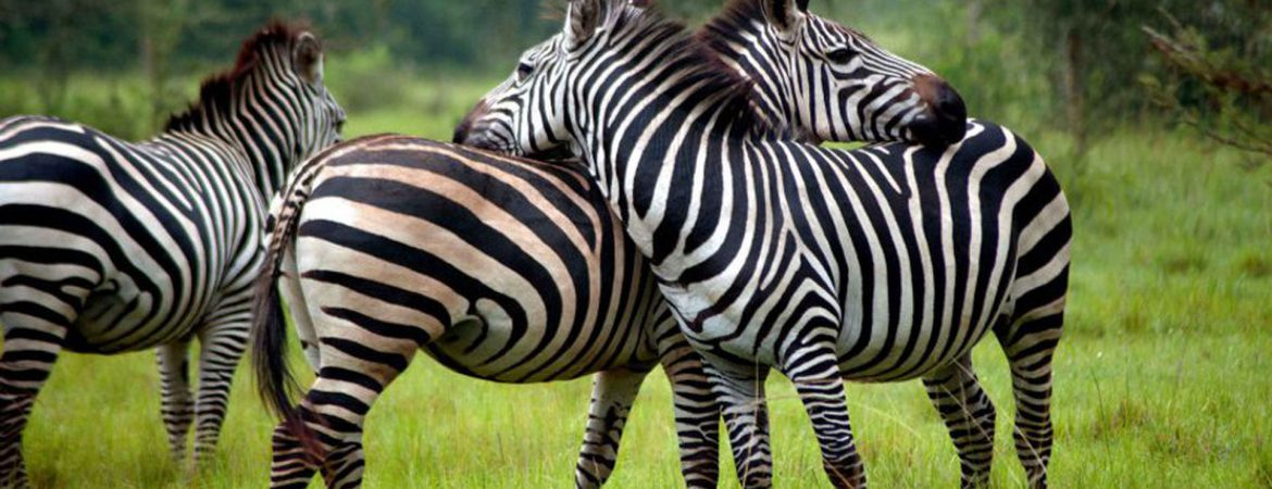 2 Days Lake Mburo Wildlife Tour