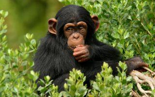 3 Days Ngamba Island & Wildlife
