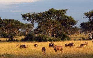 3 Days Queen Elizabeth Wildlife Safari