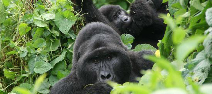 4 Days Bwindi Gorillas and Lake Bunyonyi