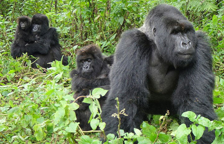 4 Days Double Gorilla Trekking