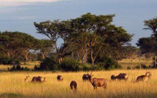 4 Days Queen Elizabeth NP Safari
