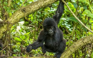 5 Days Murchison Falls & Bwindi Gorillas