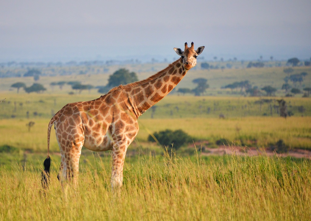 5 Days Uganda Wildlife Safari