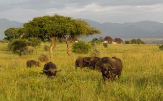 11 Days Uganda Getaway Escapade