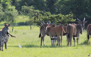 12 Days Uganda Wilderness Tour