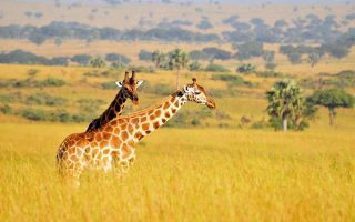 18 Days Discover Uganda Safari