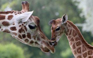 21 Days Explore Uganda Safari