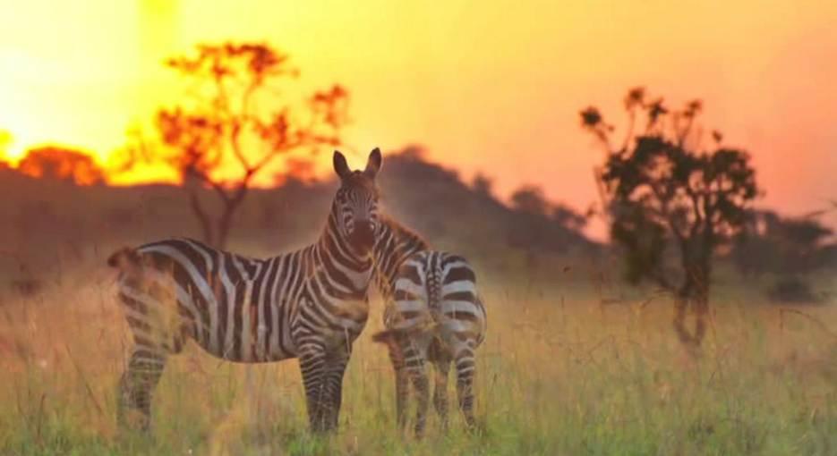 5 Days Kidepo National Park Tour