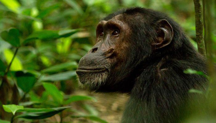 6 Days Uganda Primate Experience