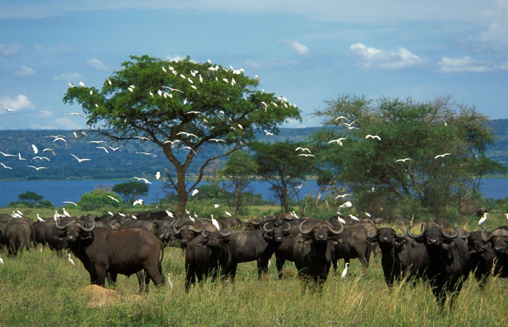 7 Days Uganda Family Safari