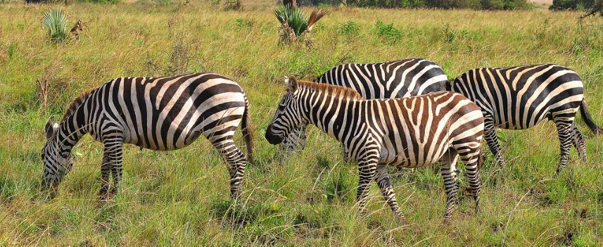 3 Days Kidepo Wildlife Safari