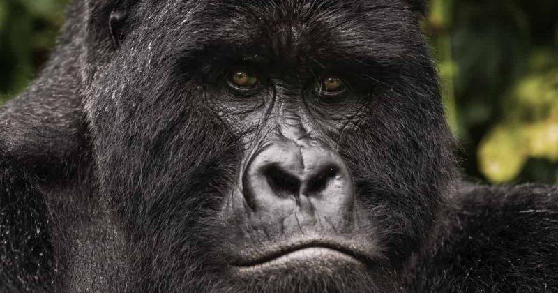 Bwindi Impenetrable National Park