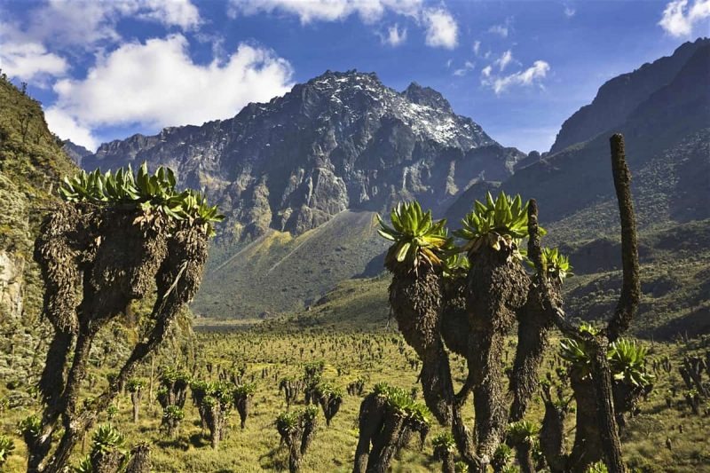 Rwenzori Mountains National Park is a block mountain that rises from and forms the