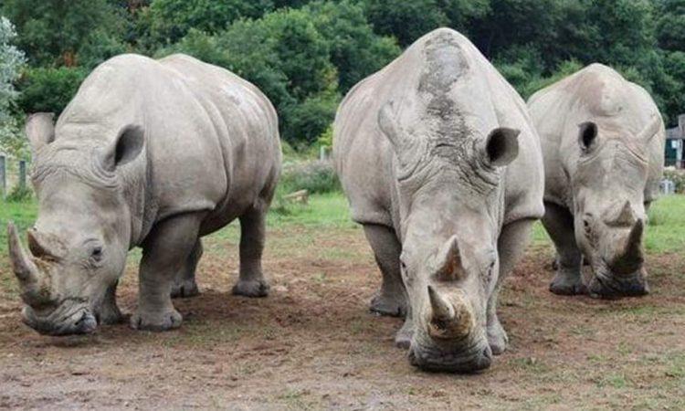 Ziwa-Rhino-Sanctuary