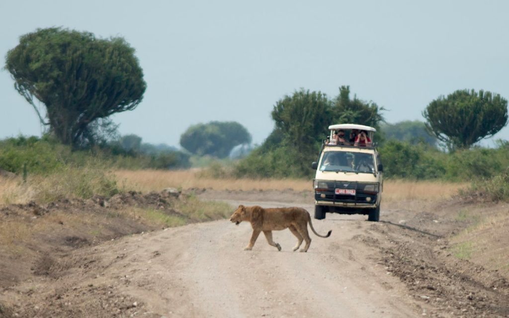 Game Drive in Murchison