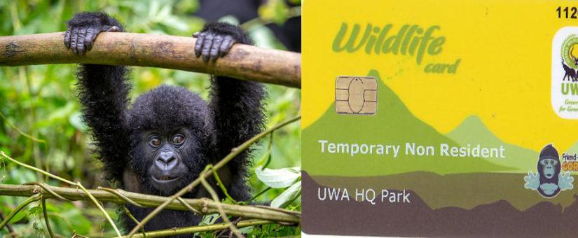 gorilla permit in Uganda