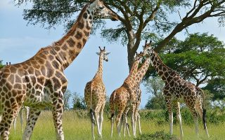 2 Days Murchison Falls Tour