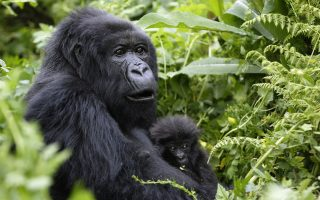 3 Days Gorilla Trekking from Kampala