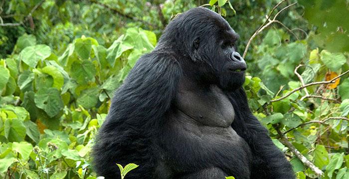 4 Days Bwindi Gorilla Trekking & Lake Bunyonyi safari