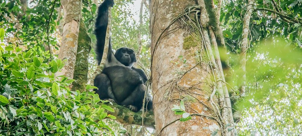 How to Get to Bwindi