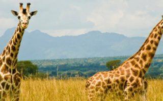 5 Days Kidepo Wildlife & Sipi Falls Safari