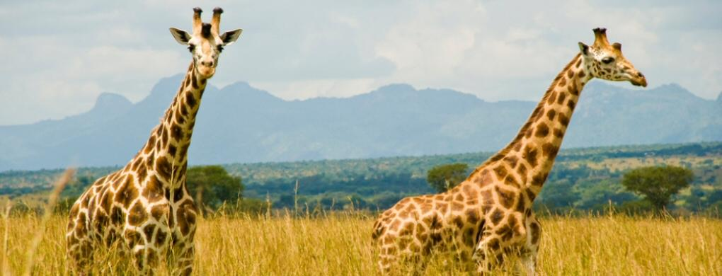 5 Days Kidepo Wildlife & Sipi Falls Safari