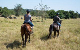 3 Days Lake Mburo Safari