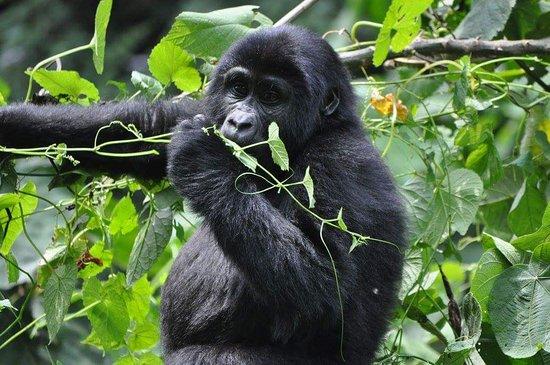 Best Time to Visit Virunga National Park