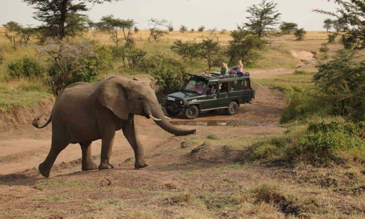 2 Days Murchison Falls Safari