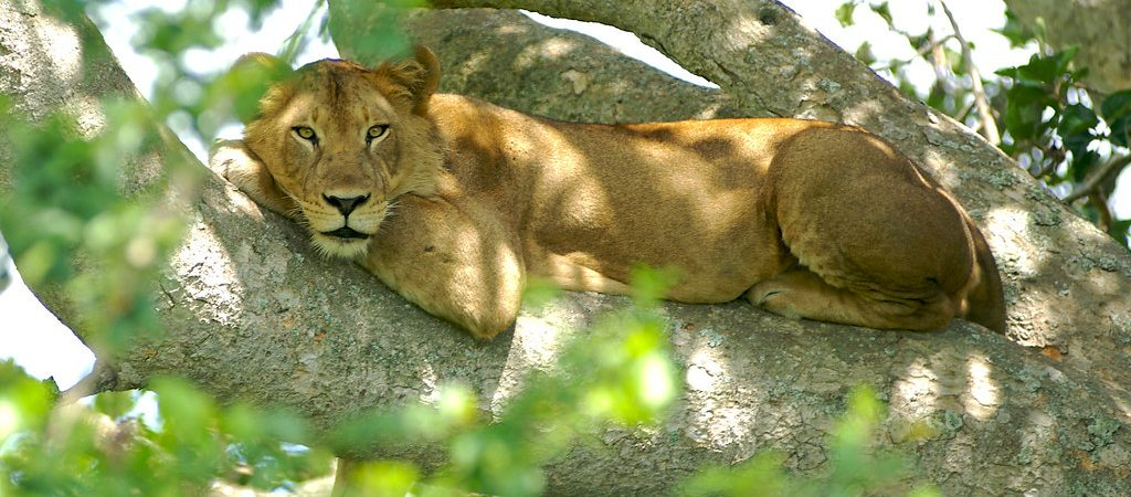 4 Days Queen Elizabeth National Park Safari