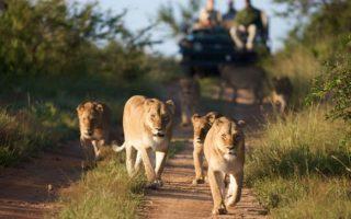 5 Days Bwindi & Queen Elizabeth Wildlife Safari Tour