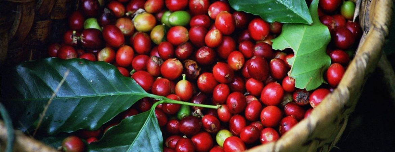 Coffee Tours in Queen Elizabeth National Park