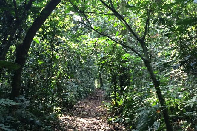 Kalinzu Central Forest Reserve