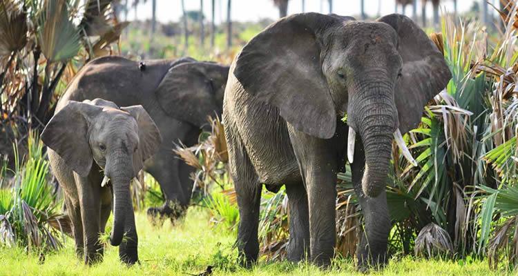 Uganda Safari Experience