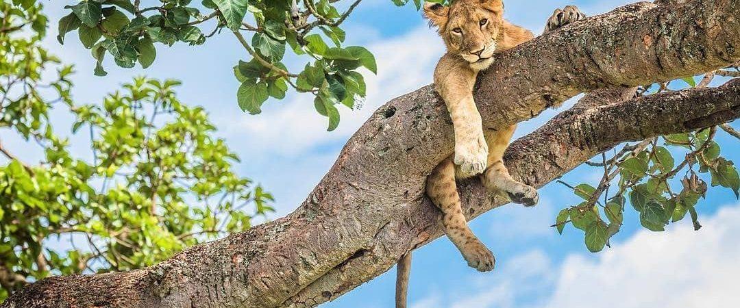 Uganda Safari in December