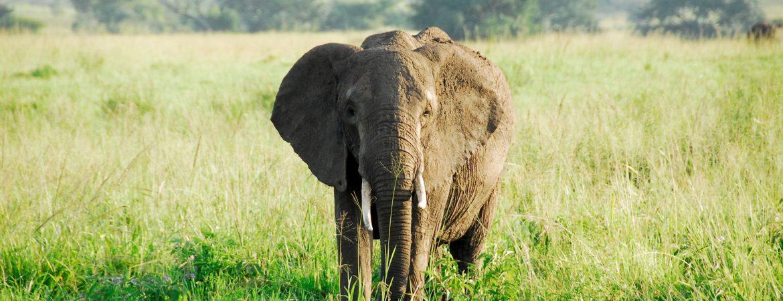 Uganda Safari in June