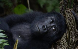 Uganda Safari Tours & Holidays