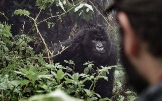 Uganda Safaris & Excursions