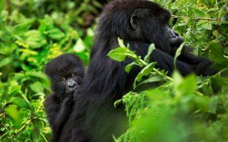 A day in Uganda for a safari