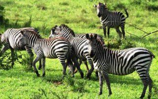 Short Safaris to Uganda