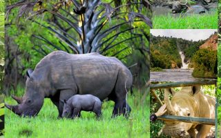 Uganda Safari Booking