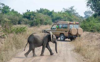 Uganda Safari Game Drives