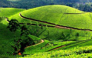 Uganda Tea Safari