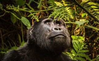 Uganda the Land of Endless Wonders