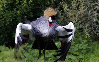 3 Days Lake Mburo Birding Safari