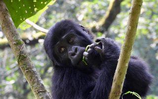 6 days Uganda gorilla tracking and wildlife safari