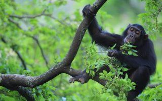 9 Days Uganda Rwanda Primates and Wildlife Safari