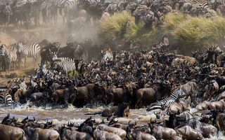12 Days Wildebeest Migration & Congo Safari